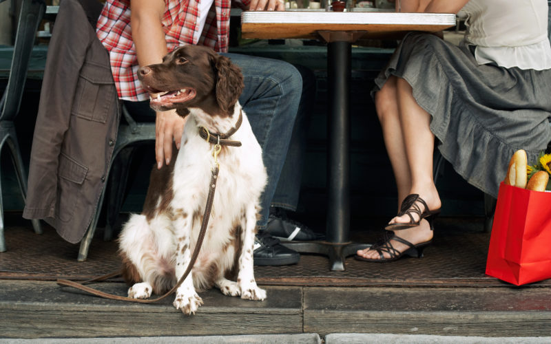 Your guide to the best dog-friendly patios in the Chino Hills area
